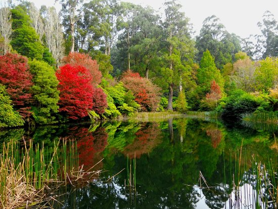 National Rhododendron Gardens: beautiful autumn relections
