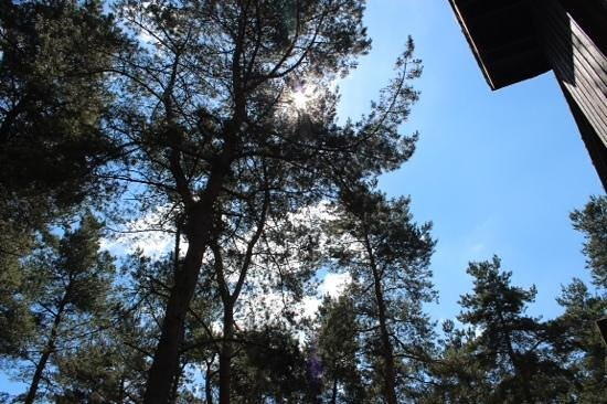 Center Parcs Whinfell Forest: sunny day at CP