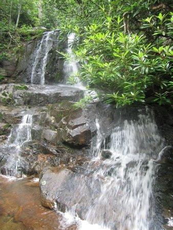 Laurel Falls: Fall