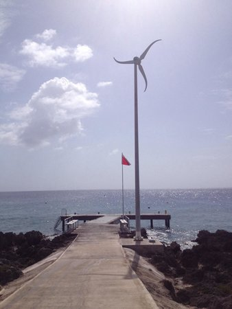 Turtle Reef is a Shore dive from Lighthouse Point, Divetech's second site!