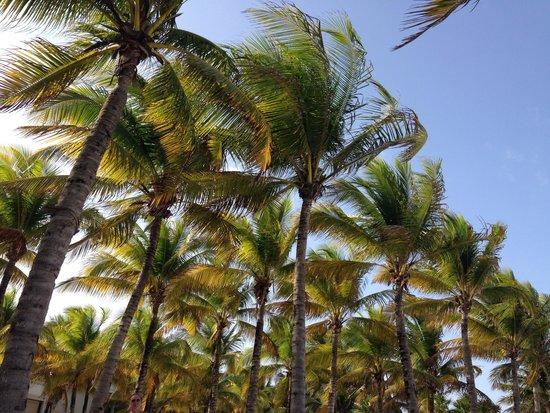 Hotel Riu Palace Riviera Maya: Gorgeous
