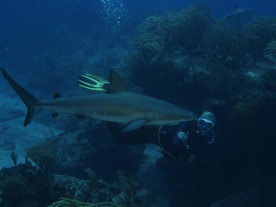 PADI Caribbean Dive College : Wieke & Cooper (Shark)