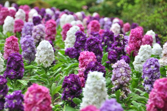 The Butchart Gardens: Flowers