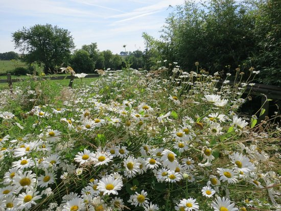 Le Trot'in Chair : View with daisies