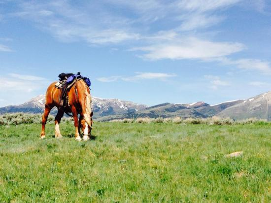 Broken Arrow Lodge: Photo of a trail horse while we took a break to stretch our legs. Look at that view!