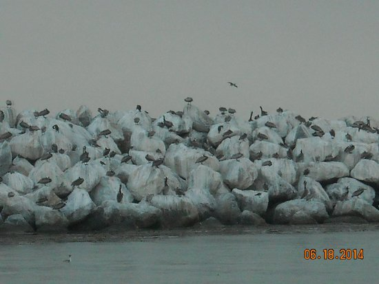 Island Packers: A flock of seagulls