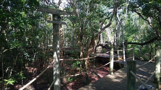 Lubbers' Landing: The path to our tree house.