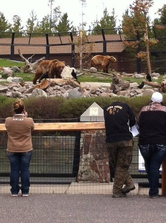 Grizzly and Wolf Discovery Center: Grizzly's