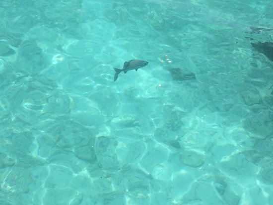 Veligandu Island Resort & Spa : Just one of the many fishes that visited everyday