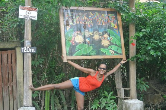 Funky Monkey Lodge : The funkiest monkeys of all stay here.