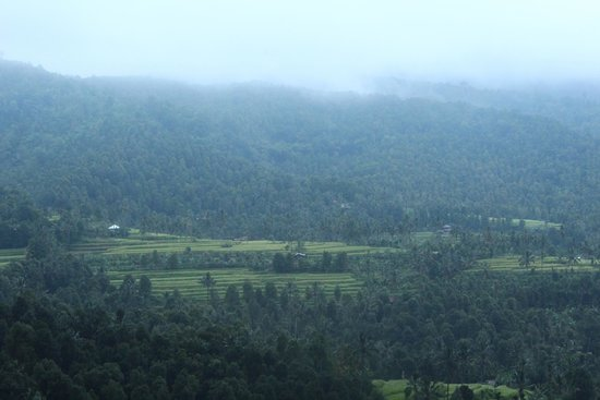 Puri Alam Bali Bungalows : view from the room as the fog descends