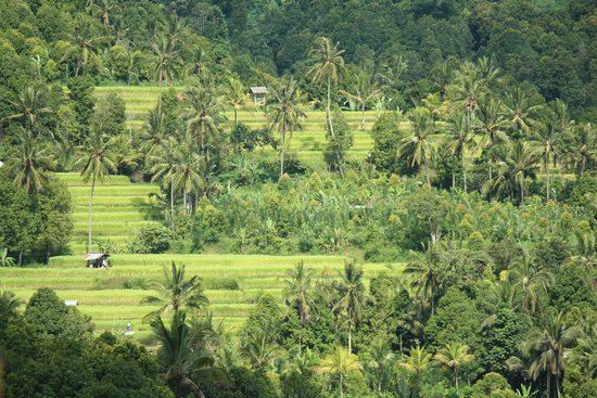 Puri Alam Bali Bungalows: view of the rice fields from the room