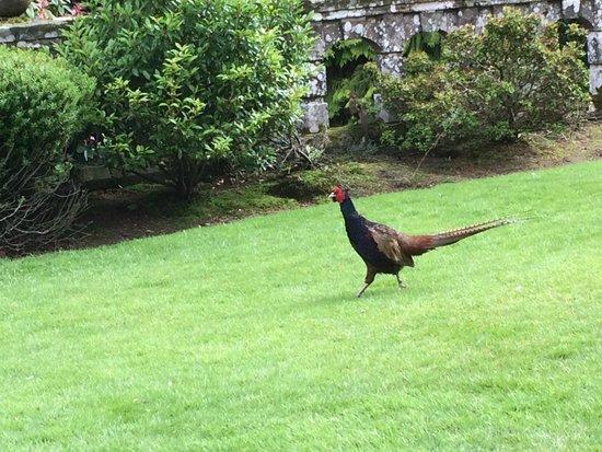 Kildrummy Castle Gardens: Grouse!