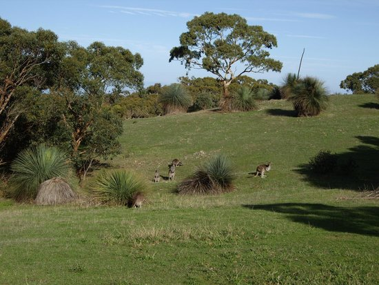Cape Jervis Holiday Units: Kangaroos at Deep Creek.