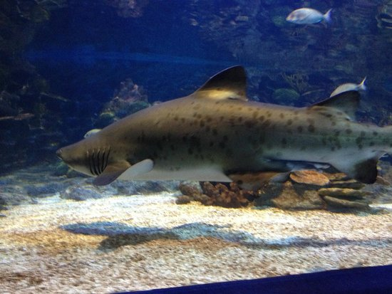 Istanbul Sea Life Aquarium: Ein Hai! :-)