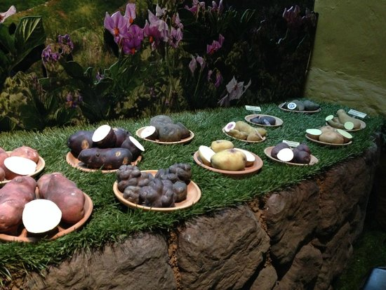 Museo Historico Regional: potatoes