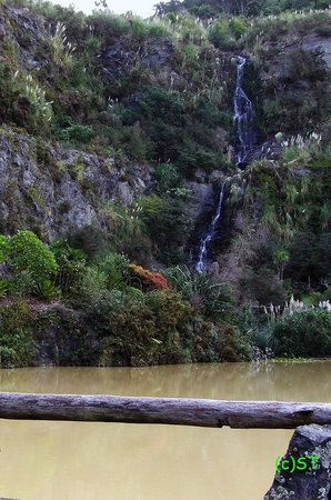 Whangarei Quarry Gardens: brown muddy water