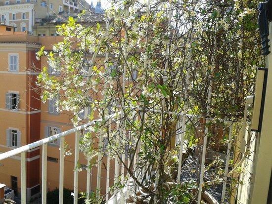 Hotel Raffaello: Room balcony - scented jasmine