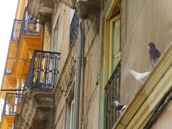 Valencia Mindfulness Retreat: 3 Tauben