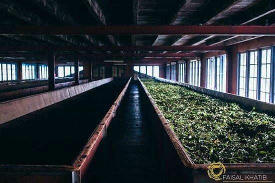 Bluefield Tea Gardens: Sorting