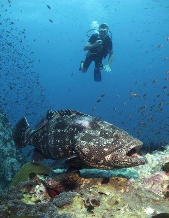 Asia Divers: Diving Chumphon Pinnacle