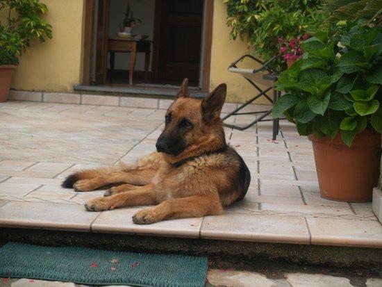 Agriturismo Antico Casale Colli di San Pietro: The sweet dog, Zephira.