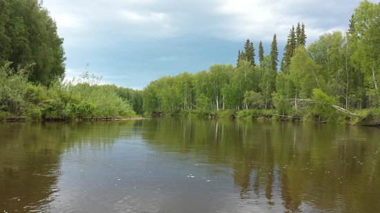 Alaska-Wildlife-Guide - Day Tours: Chena River Alaska
