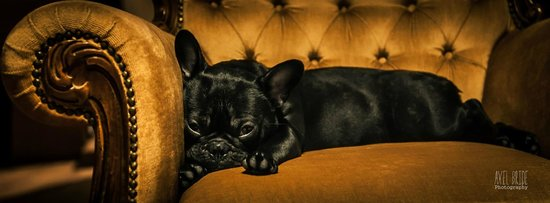 carottes de couleur picture of le chien de pavlov. Black Bedroom Furniture Sets. Home Design Ideas