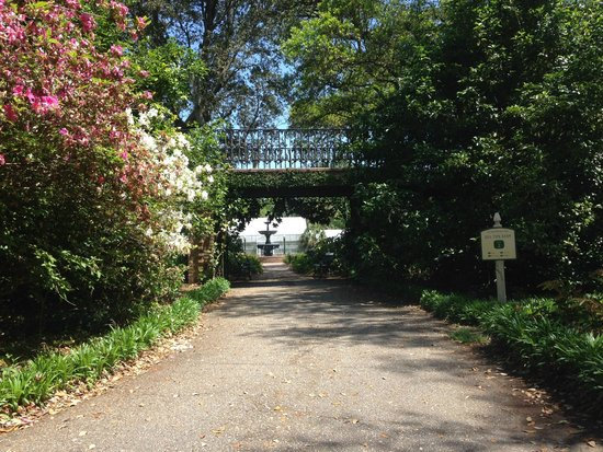 Lovely Hydranges Picture Of Bellingrath Gardens And Home Theodore Tripadvisor