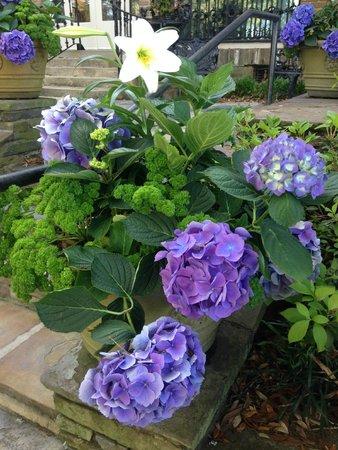 Bellingrath Gardens and Home: more hydrangeas