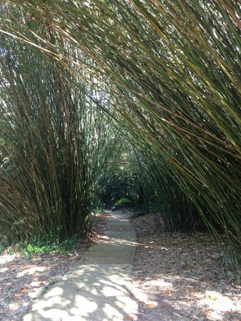 Bellingrath Gardens and Home: lots of bamboo