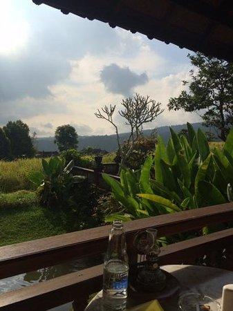 Puri Lumbung Cottages : uitzicht vanaf terras cottage nr 5