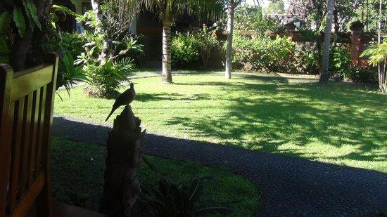 Bumas Hotel : garden
