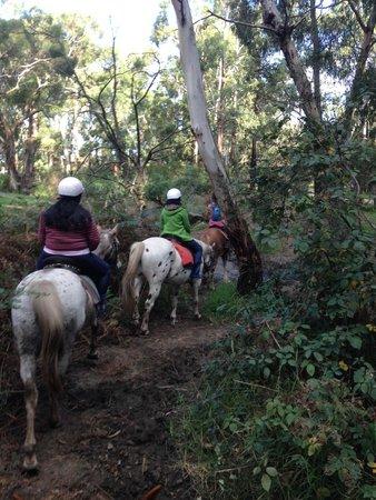 Blazing Saddles: Trails