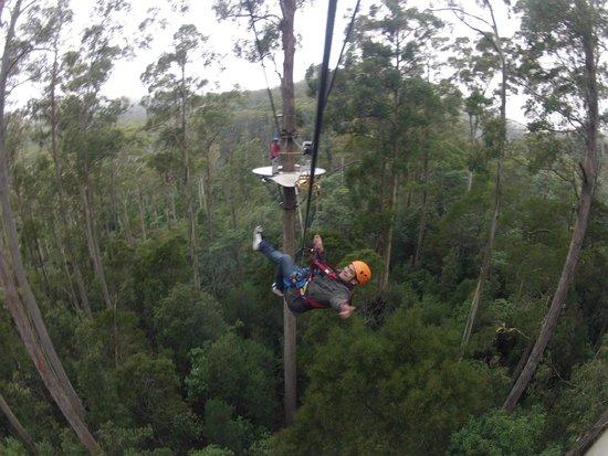 Hollybank Treetops Adventure: Free flying