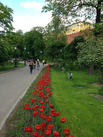 Aleksandrovskiy Sad: весна 2014