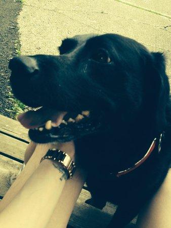 Killin Highland Lodges: Happy Dog!!!
