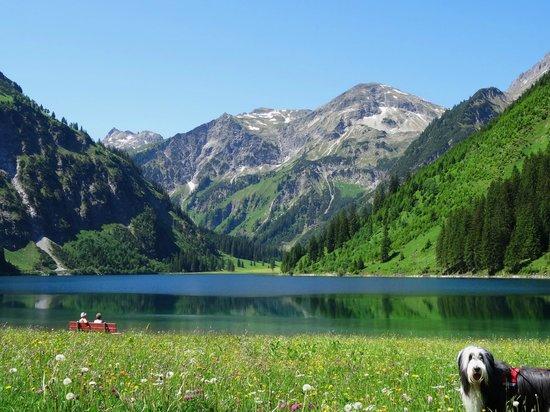 Vilsalpsee: Abkühlend für den Hund....