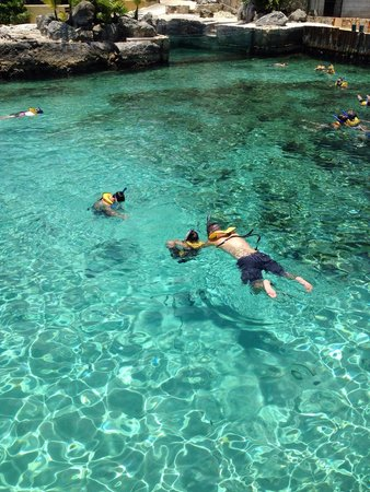 Dolphinaris Cozumel: The snorkeling lagoon.