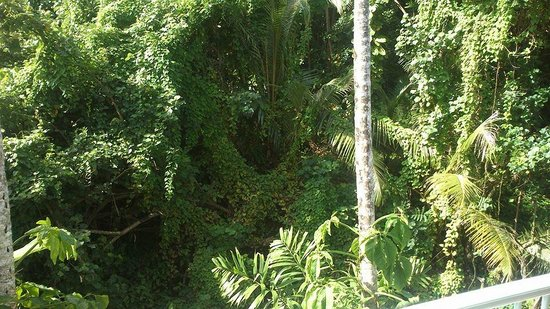 By The Sea Port Douglas: Beautiful thick rainforest.