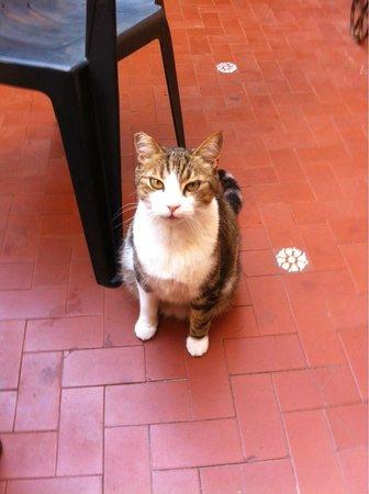 Elyse: Cat