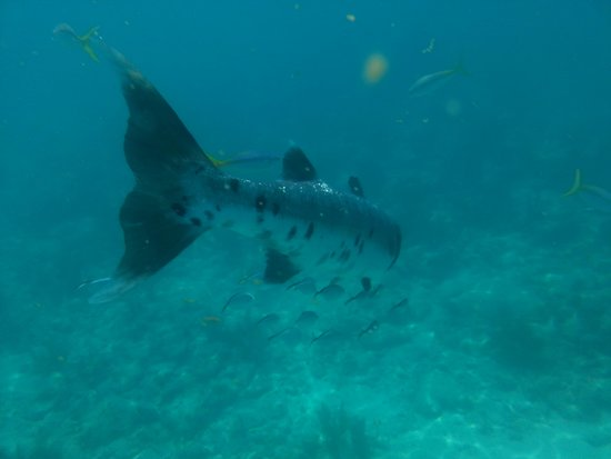 Take Me There Charters: Up close encounters with a barracuda!