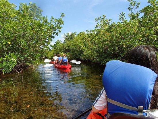 Sea Elements: magroves kayak