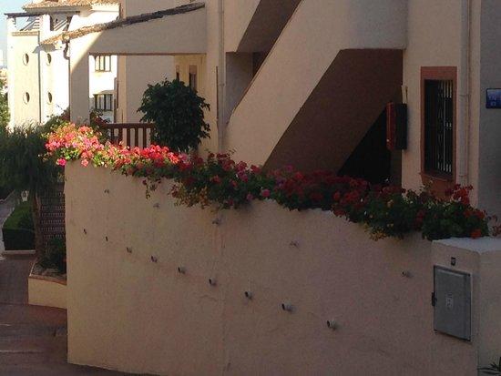 Crown Resorts Club Marbella / Club Regency Palms: flowers opposite our rooms - a wonderful site