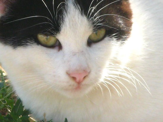 Odyssee Resort & Thalasso : Un amour de petite chatte d'hôtel