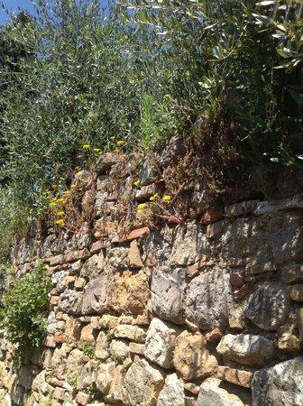 Trattoria Toscana Al Vecchio Forno: просто стена с растительностью