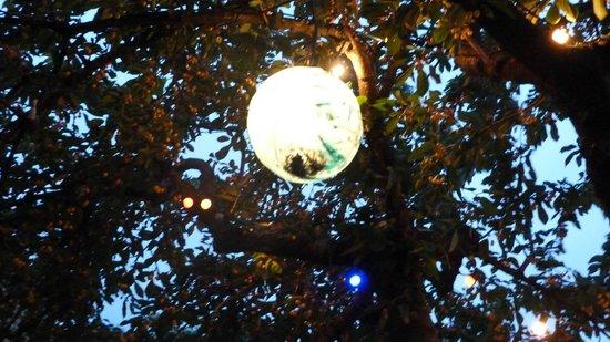 Le Patio des Créateurs - Les 3 cathares : bulle de lumiere sous le magnifique cerisier