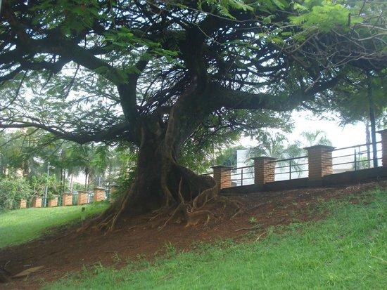 Bosque dos Buritis : uma bela árvore