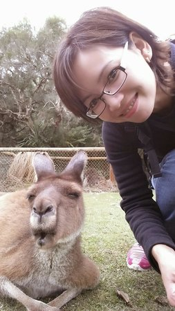 Caversham Wildlife Park: Roo doing a selfie!