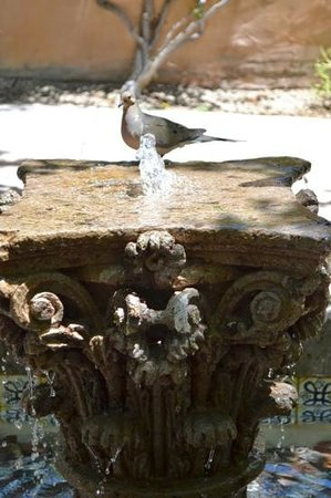 Royal Palms Resort and Spa: Mourning Dove cools off in a fountain